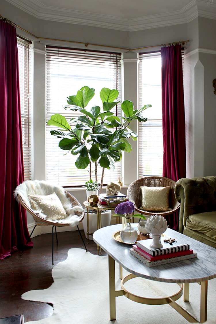 fiddle leaf fig by swoonworthy