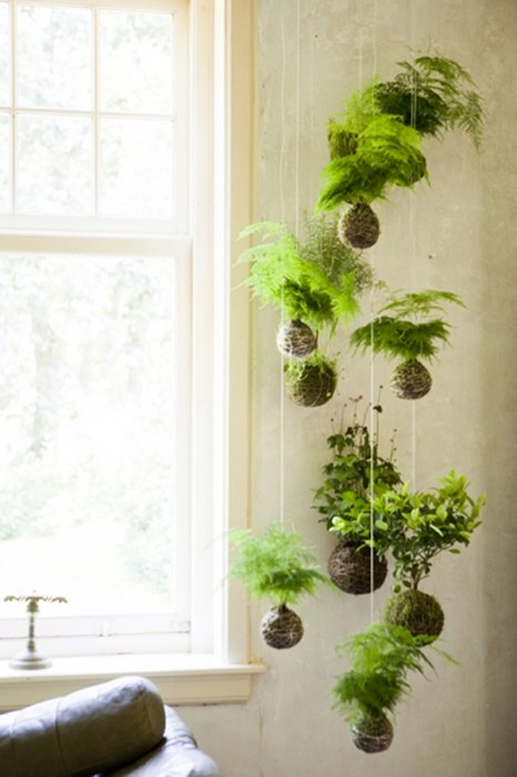 Beautiful Hanging Green Plants From Pinterest Part 17