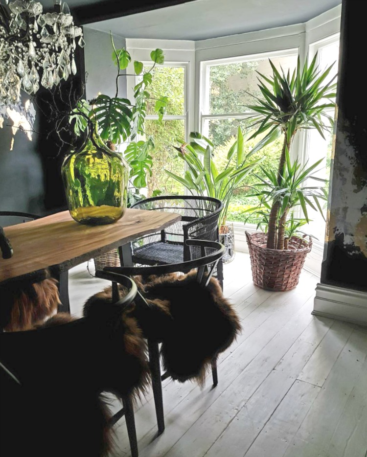 black dining room with plants and floorboards by cowboy kate