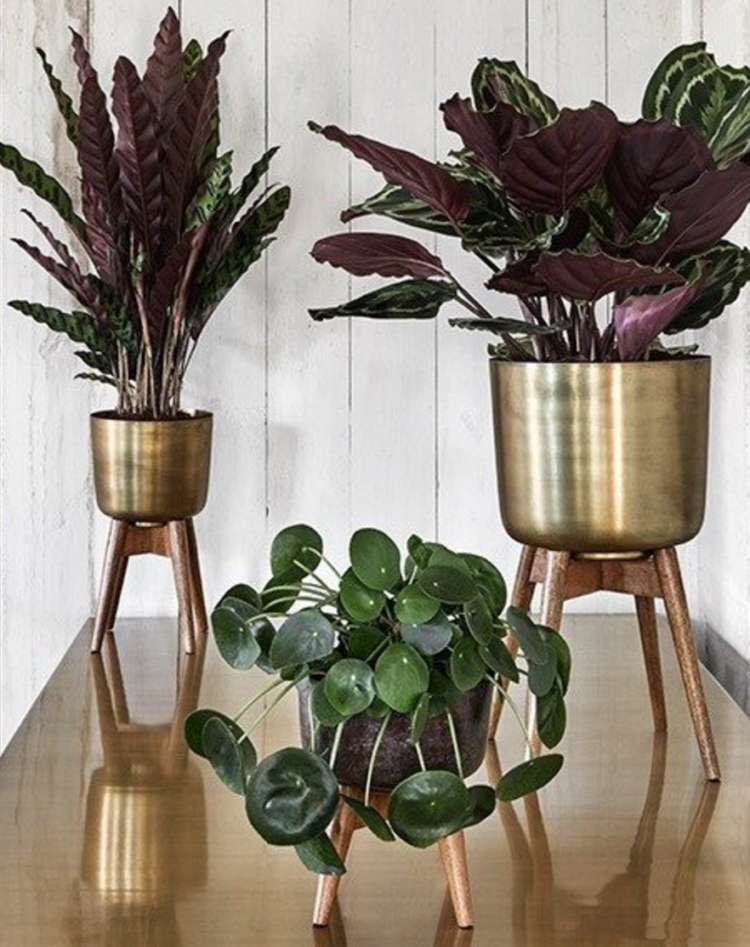 brass and wooden plant stand from homeplace